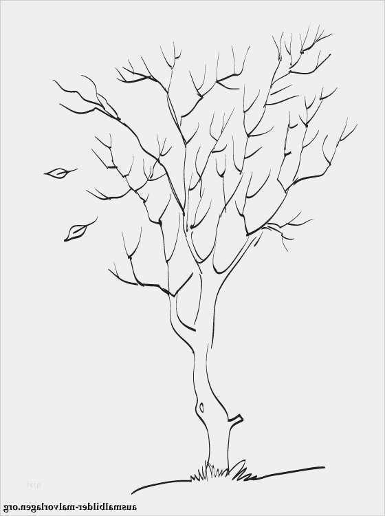 stammbaum vorlage zum ausdrucken kostenlos cool