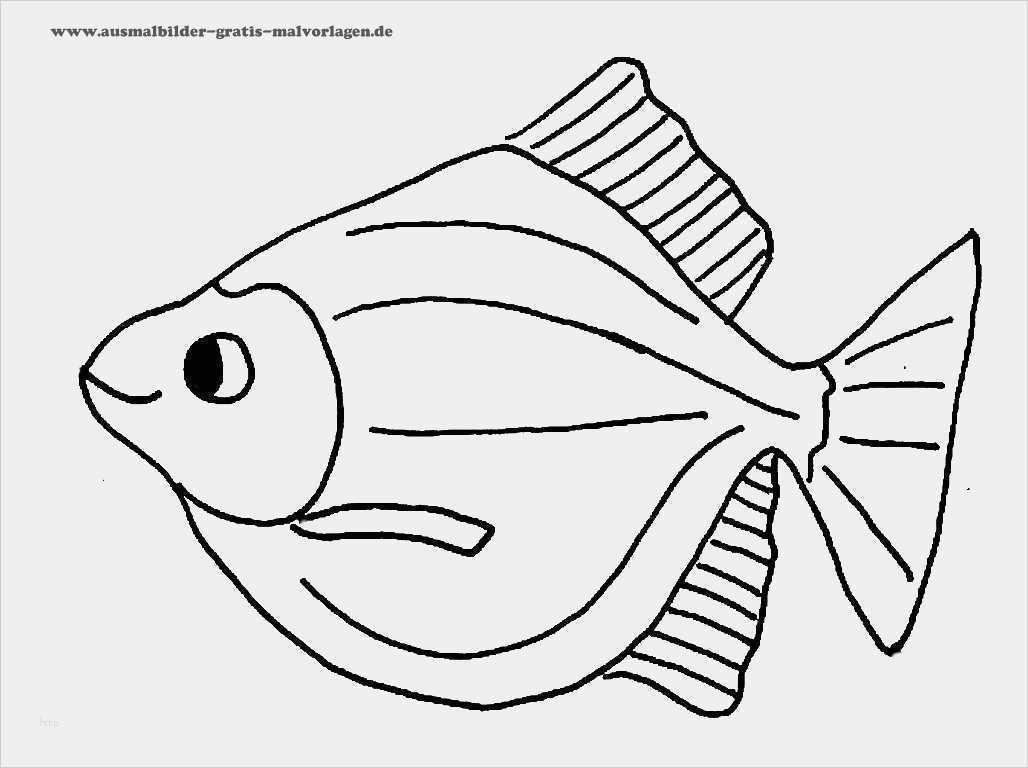 urheberrecht vorlage best of kostenlose malvorlagen fische